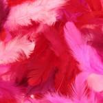 Plumes colorées 10 g - Rouge