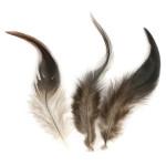 Plume de coq brun foncé 10 - 15 cm